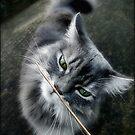 Snif, snif ... by LouiseK