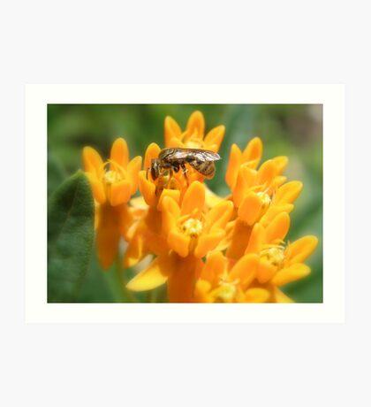 Bee-utiful  Art Print
