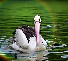 Beautiful Life (Please View Larger) by Charuhas  Images