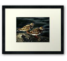 Avian Beauty ~ Part Nineteen Framed Print