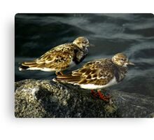 Avian Beauty ~ Part Nineteen Metal Print