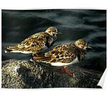 Avian Beauty ~ Part Nineteen Poster