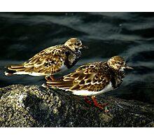 Avian Beauty ~ Part Nineteen Photographic Print