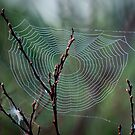 Spiders Web by Laura Cooper