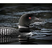 Loon in Algonquin Park Photographic Print