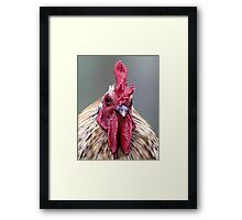 Ruler of his Roost Framed Print