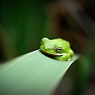 Chillaxin' - Small Green Texan by Tara Wagner