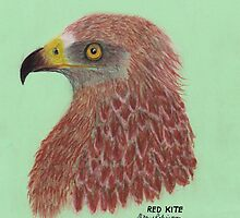 Red Kite by Hilary Robinson