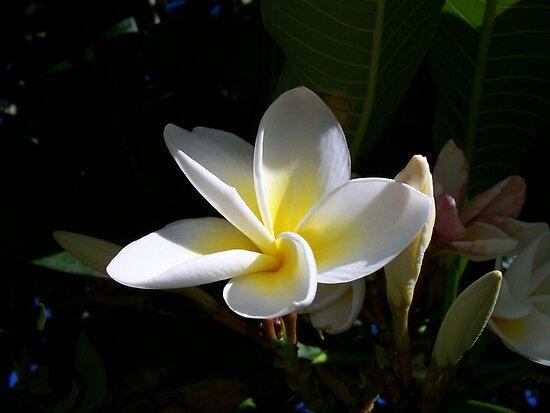 White Flower by Chanzz