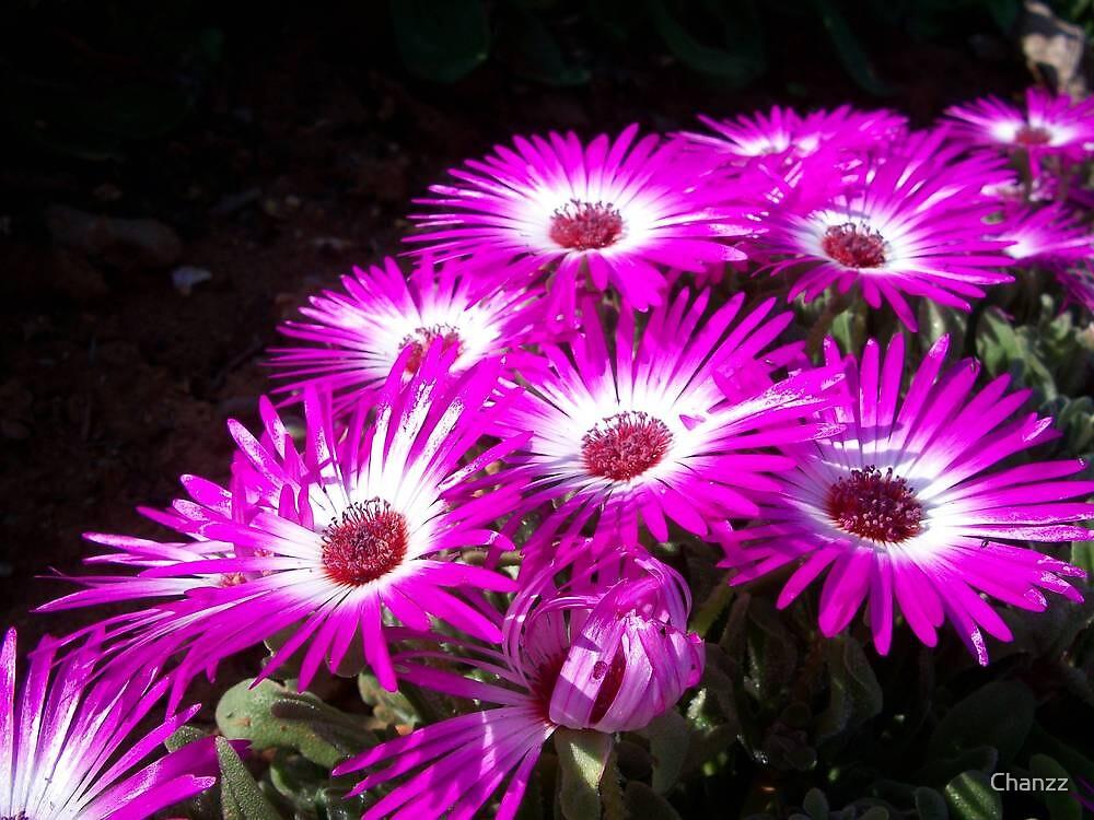 Pink & Purple Bunch by Chanzz