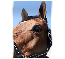 Portrait of a Horse, I Poster