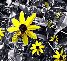 The Color of Summer by Tracy DeVore