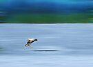 Landing.... by Sally Green