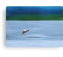 Landing.... Canvas Print