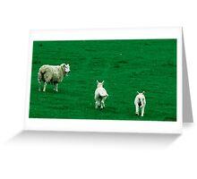 Scared Lambs Greeting Card