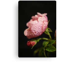 The Rose ~ And It's Bud ~ Canvas Print