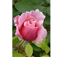 Simply a Rose Photographic Print