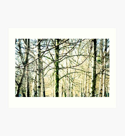 Trees at the Park Art Print