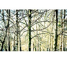 Trees at the Park Photographic Print
