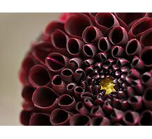 Dahlia's eye Photographic Print