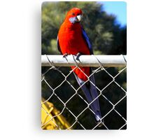 bird on a wire. tidal river - the prom  Canvas Print