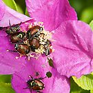 And a bug tussle, a rose by Mike Oxley