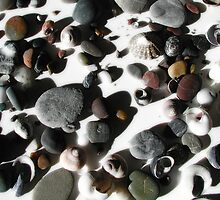 Rocks and Shells by John N.  Stewart