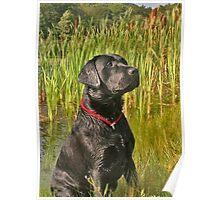 My Dog Brody Poster
