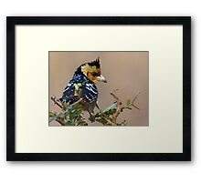 A Bad Hair Day  Framed Print