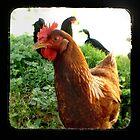 Little Red Hen by redashton