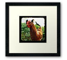 Little Red Hen Framed Print