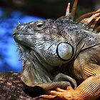 Chameleon Iguana by NYLikProduction