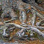 Foot of the Tree by Lynda Lehmann