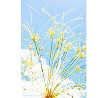 Nile Plant Photographic Print
