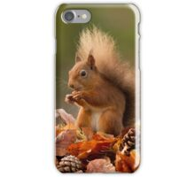 Red squirrel in autumnal leaves iPhone Case/Skin