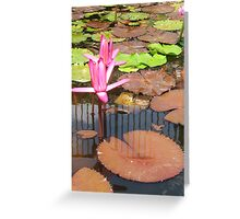 Hot Pink Beauty Greeting Card