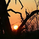 Sunrise in sabi sands by jozi1