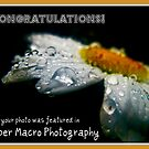 Super Macro Photography:Featured Banner  by Greta  Hasler