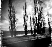 Canberra trees by Kerryn Benbow