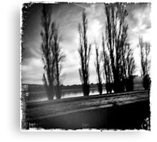 Canberra trees Canvas Print