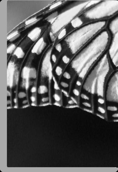 Monarch Wings or Tiffany Lamp? by AuntDot