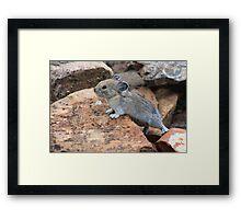 Rock rabbit Framed Print