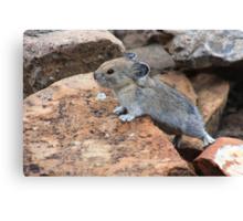 Rock rabbit Canvas Print
