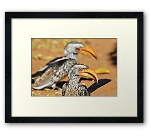 Yellow-billed Horn-bill - Beaks of Color and Life Framed Print