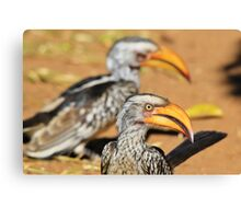 Yellow-billed Horn-bill - Beaks of Color and Life Canvas Print
