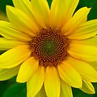 Sunflower by LeeAnne Emrick
