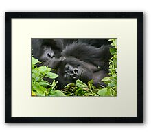 Sleeping Giant - Mountain Gorilla Framed Print
