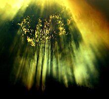 Apparition by Rinaldo Di Battista