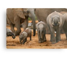 Baby African Elephants Metal Print
