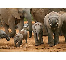 Baby African Elephants Photographic Print